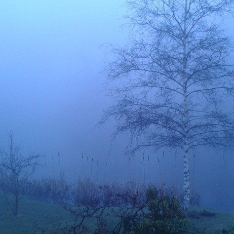 Nebel-am-Morgen-Sara