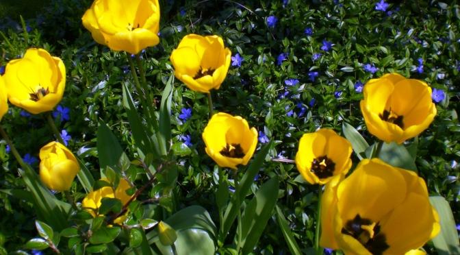 Der Frühling ist da! Draußen…