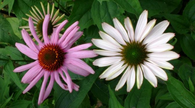 Blumensommer